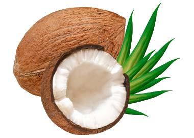 Beautiful Versatile Coconut