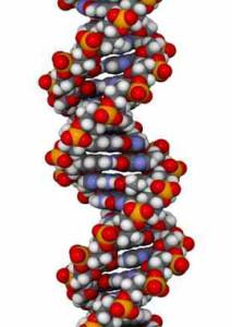 DNA Anti-Ageing Test