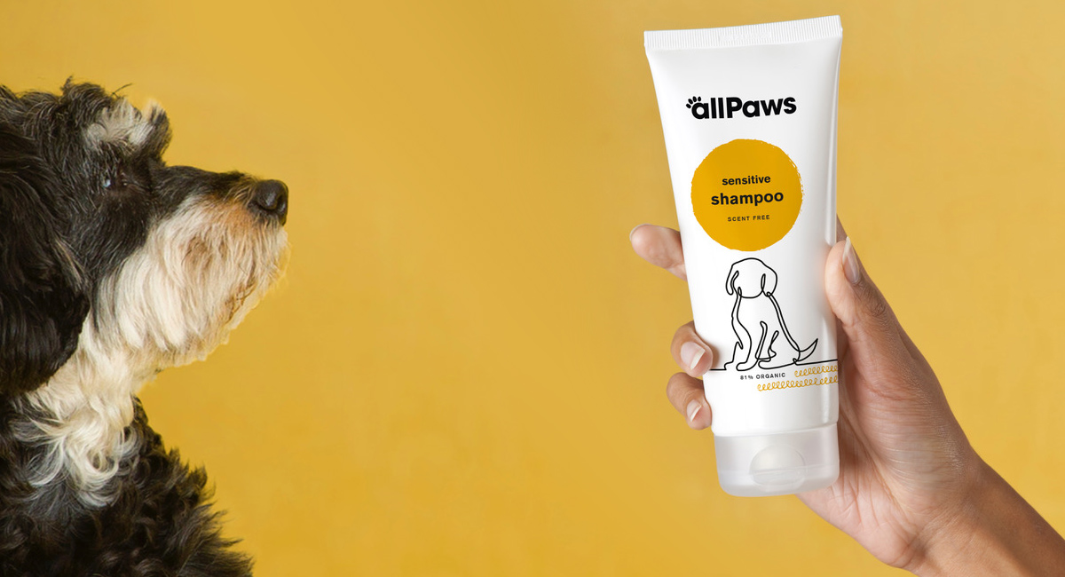 Dog Looking at All Paws Shampoo Tube in Hand
