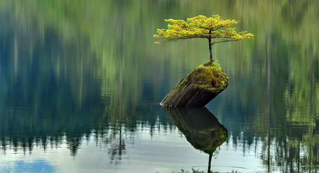 Little Tree on Stump in Lake